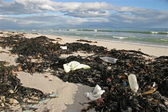 ЕС планирует запретить оборот одноразовой пластиковой посуды